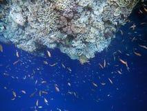 Fische und Koralle in niemandem Meer Lizenzfreie Stockfotos