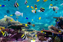 Fische und Koralle, Unterwasserlebensdauer Lizenzfreie Stockfotos