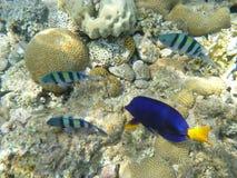 Fische und Korallen Lizenzfreie Stockfotografie