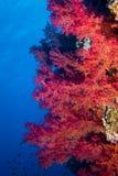 Fische und Korallen auf Riff Stockfotos