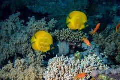 Fische und Korallen auf Riff Lizenzfreies Stockfoto