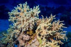 Fische und Korallen auf Riff Stockbild