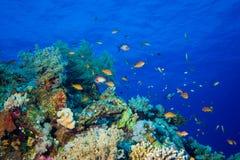 Fische und Korallen auf Riff Lizenzfreie Stockfotos