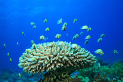 Fische und Korallenriff Lizenzfreies Stockbild