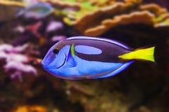 Fische und Korallenriff Stockfoto