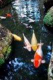 Fische und Landschaften lizenzfreies stockfoto