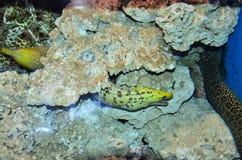 Fische und Meer lizenzfreies stockbild