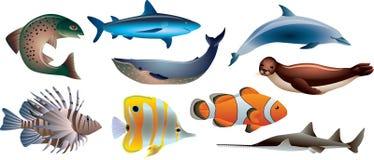 Fische und Meeresflora und -fauna-Satz Lizenzfreie Stockfotos