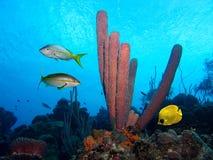 Fische und purpurrote Gefäßschwämme Stockfotos