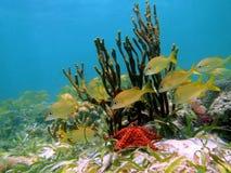 Fische und Starfish Lizenzfreie Stockfotografie