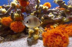 Fische unter Korallen Lizenzfreies Stockfoto