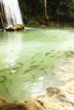Fische unter Wasser Stockbild