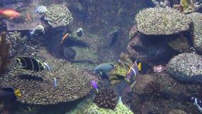 Fische Unterwasser stock video footage