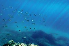 Fische Unterwasser Lizenzfreies Stockfoto