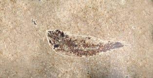 Fische versteinert in einem Steinblock lizenzfreie stockfotos