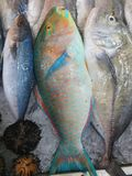 Fische Vietnam Phuquoc stockfotos