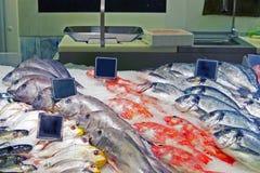 Fische widersprechen Stockfoto