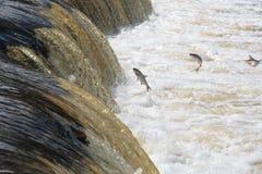 Fischeier auf dem Fluss Lizenzfreies Stockfoto