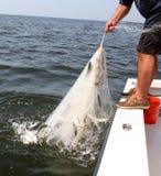 Fischen Stockbild