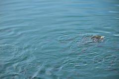 fischen Stockbilder