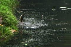 fischen Stockfoto