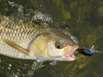 fischen Lizenzfreie Stockfotos