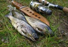 fischen Stockfotografie