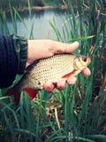 fischen Lizenzfreie Stockfotografie