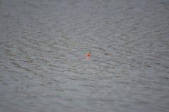 Fischen Bobber im See-Wasser stockbild