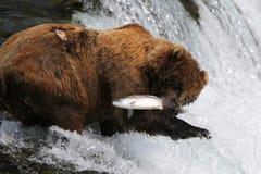 Fischen-Grizzlybär Stockbild