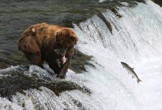 Fischen-Grizzlybär Stockfoto