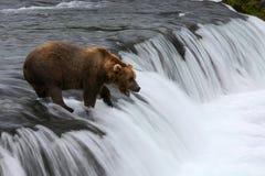 Fischen-Grizzlybär Lizenzfreies Stockfoto