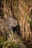 Fischen-Katze auf Zweig Lizenzfreie Stockfotografie
