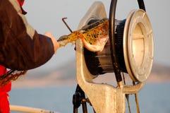 Fischen-Reihe - Ausziehen des Fischernetzes stockbild