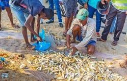 Fischen Sie auf dem Sand Lizenzfreies Stockfoto