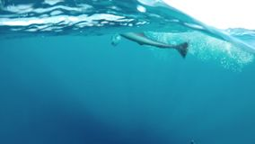Fischen Sie das Kämpfen an der Ozeanoberfläche, nachdem Sie gefangen worden sind stock video