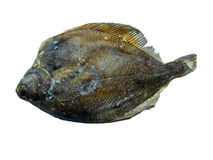 Fischen Sie den eingefrorenen Goldbutt Stockfoto