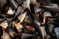 Fischen Sie eifriges für ein Stück Brot im klaren azurblauen Wasser Stockfotografie