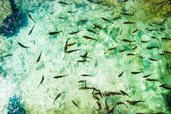 Fischen Sie im Nationalpark Plitvice, Kroatien Stockfotos