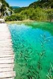 Fischen Sie im Nationalpark Plitvice, Kroatien Stockfoto