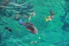 Fischen Sie im Roten Meer Stockfoto