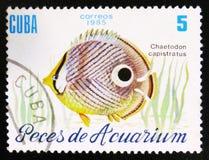 Fischen Sie mit dem Aufschrift ` Chaetodon-capistratus `, das Reihe ` Aquarium-Fische `, circa 1985 Stockbilder