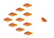 Fischen Sie Schwarm Lizenzfreie Stockfotografie