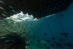 Fischen Sie unter einem sich hin- und herbewegenden Pier im Roten Meer. Stockbilder