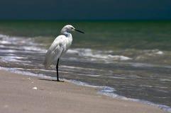 Fischen-Ufer-Vogel Lizenzfreie Stockfotos