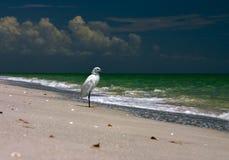 Fischen-Ufer-Vogel Lizenzfreies Stockfoto