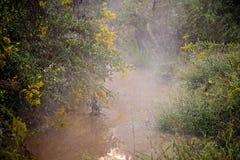 Fischennebenfluß mit Nebel des frühen Morgens Stockfotos