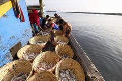 Fischentätigkeiten auf dem Boot stockbild