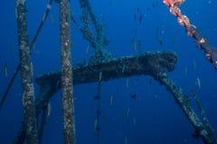Fischenwrack Lizenzfreie Stockfotografie