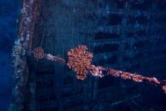 Fischenwrack Stockfotografie